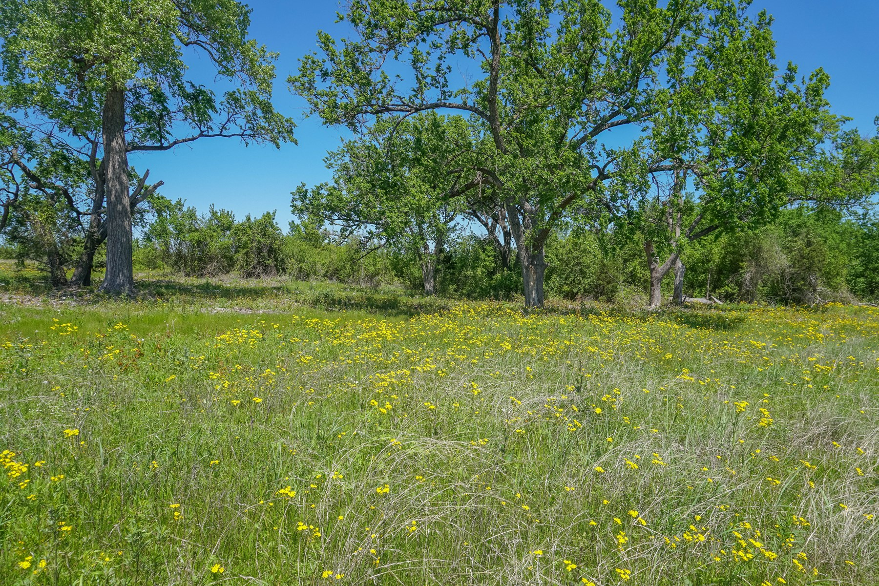 30+/- Acres in Coryell County: Hunting, Seasonal Creek