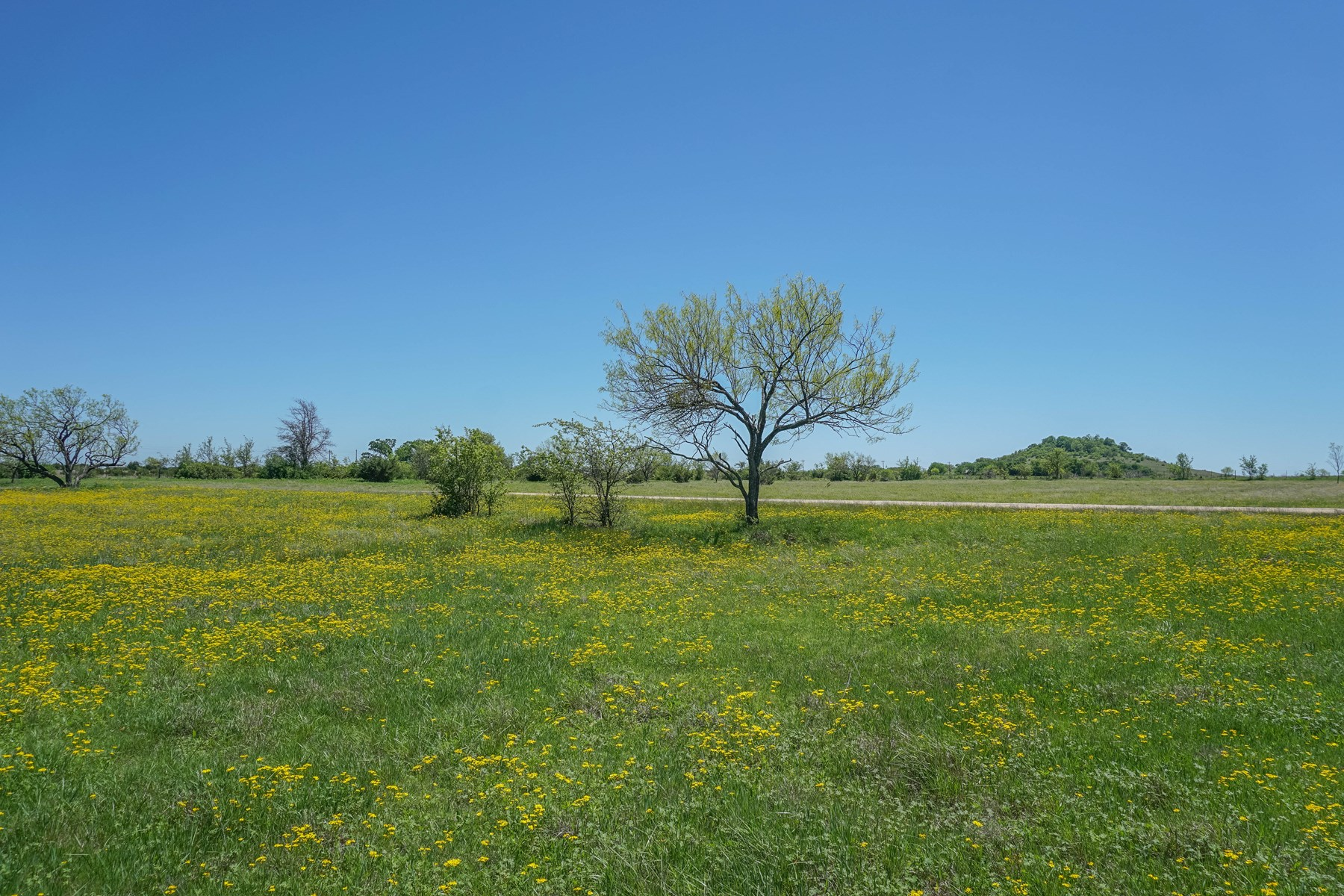 23+/- Acres in Coryell County: Beautiful Views, Mature Trees