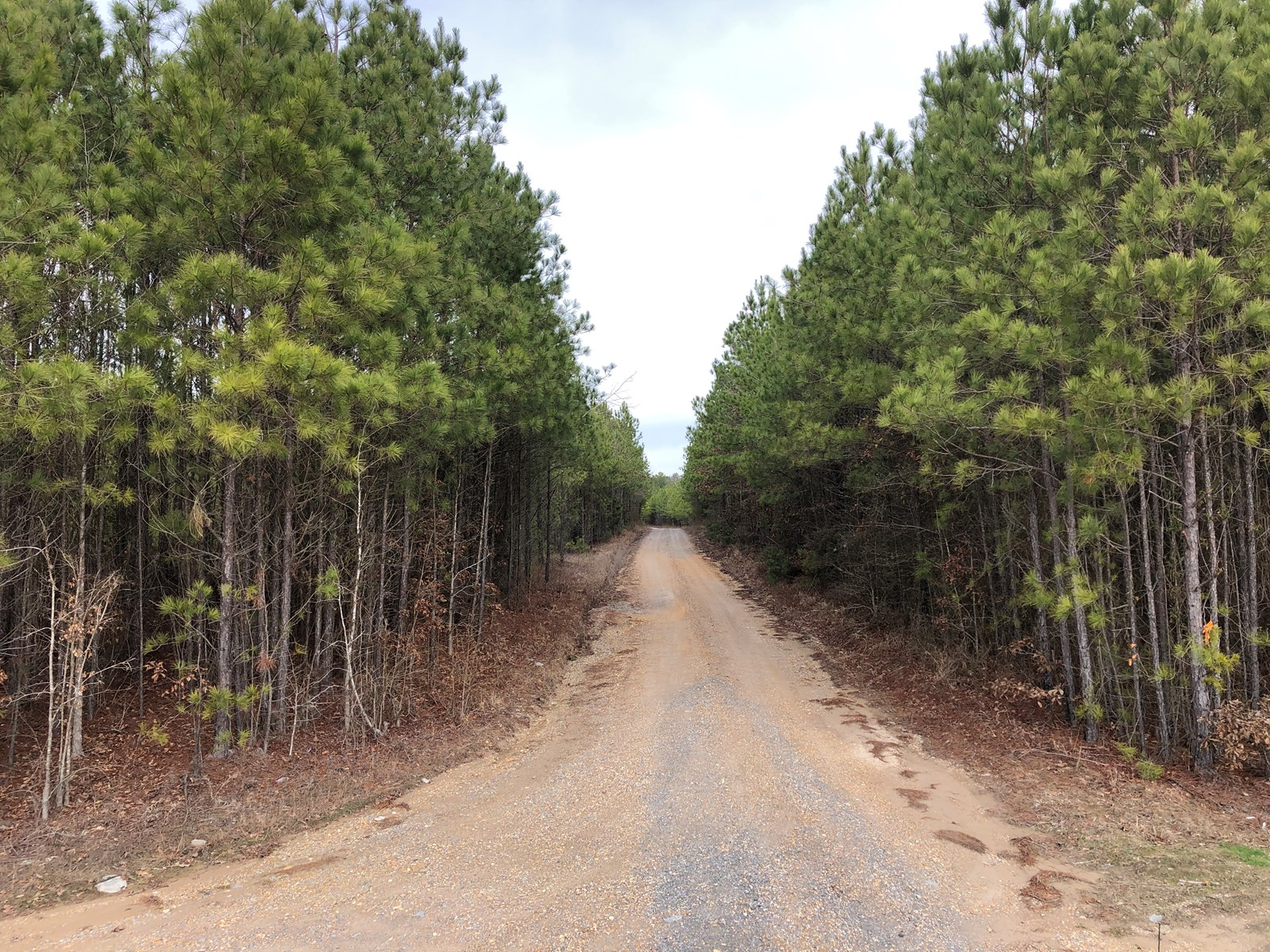 Planted Pine Investment Timberland for Sale in Union Co., AR
