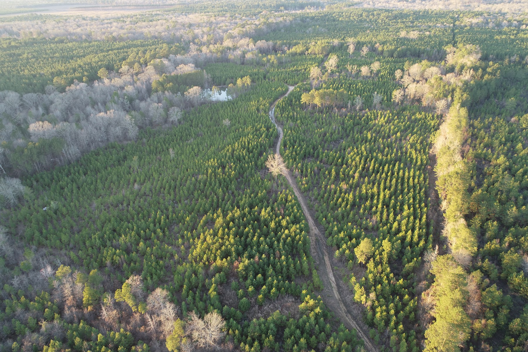 Young Pine Hunting Land W/ Pond for Sale near Strong, AR