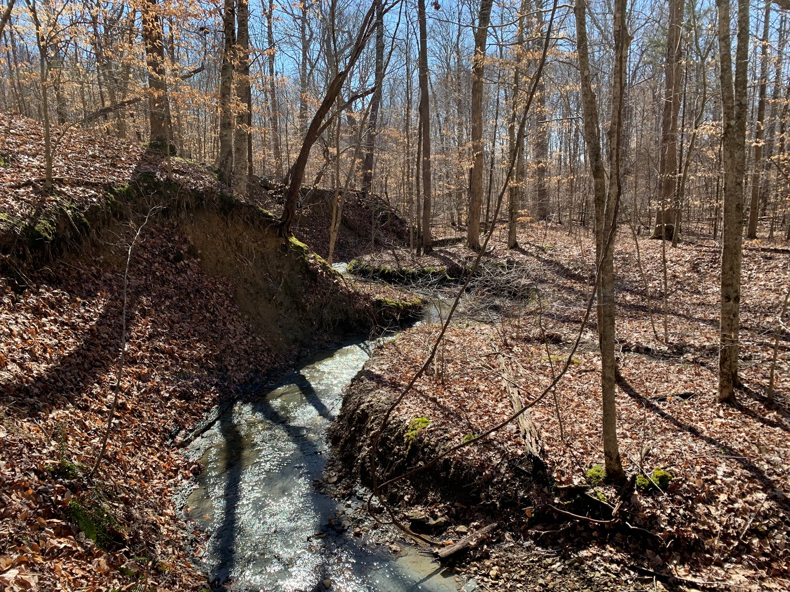MOSTLY WOODED ACREAGE-HUNTING-STREAMS-SECLUDED/LIBERTY, KY.