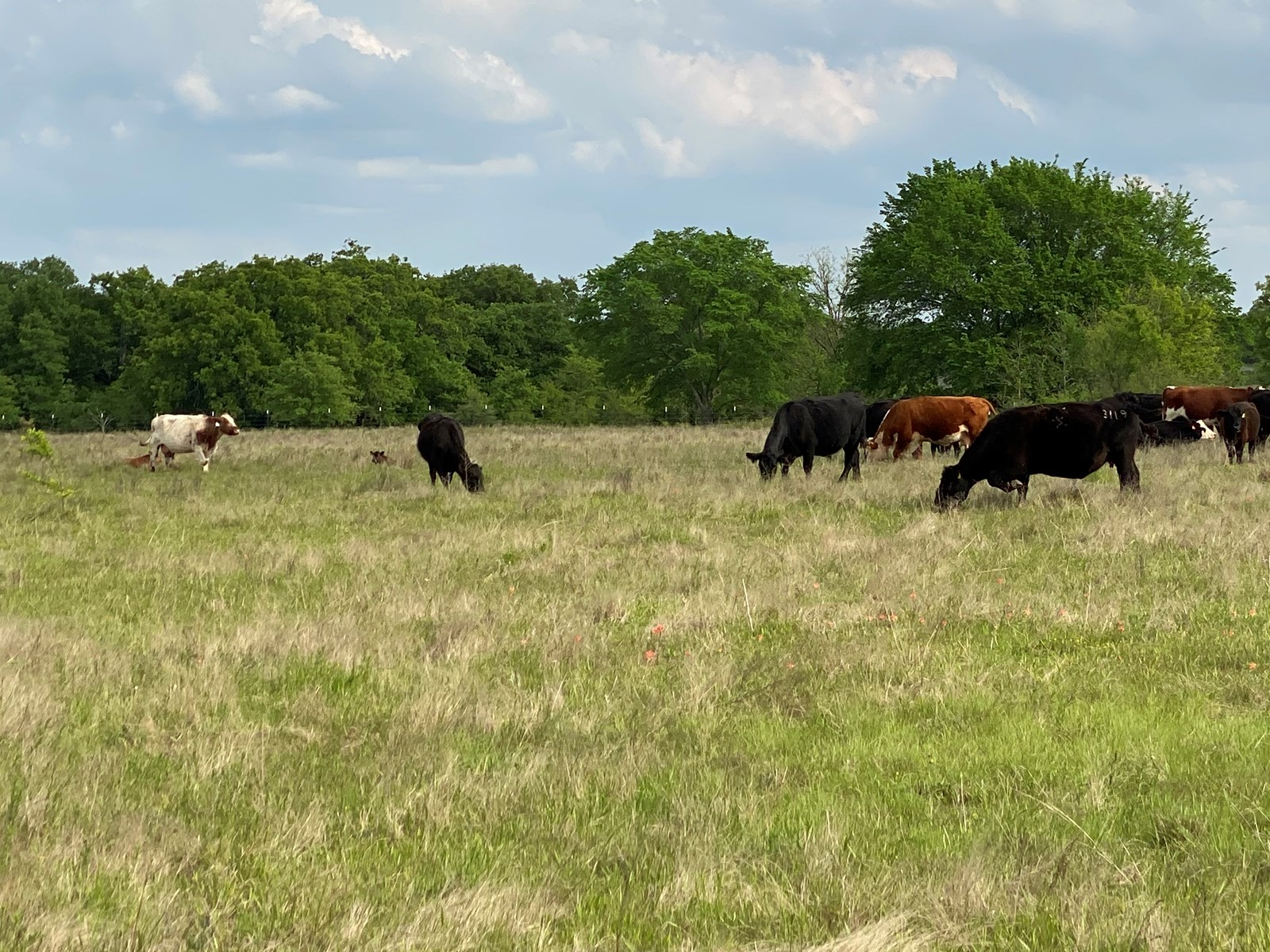 GRAZING LAND FOR SALE IN CARTER COUNTY- LONE GROVE, OK