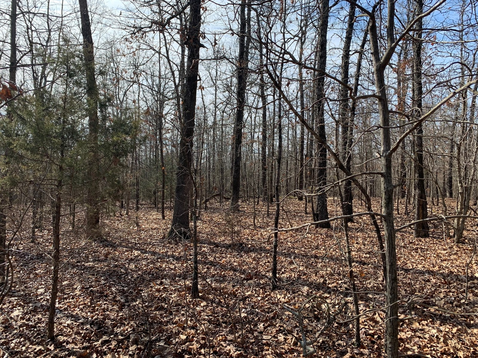 Land for sale, great deer and turkey hunting, north Arkansas