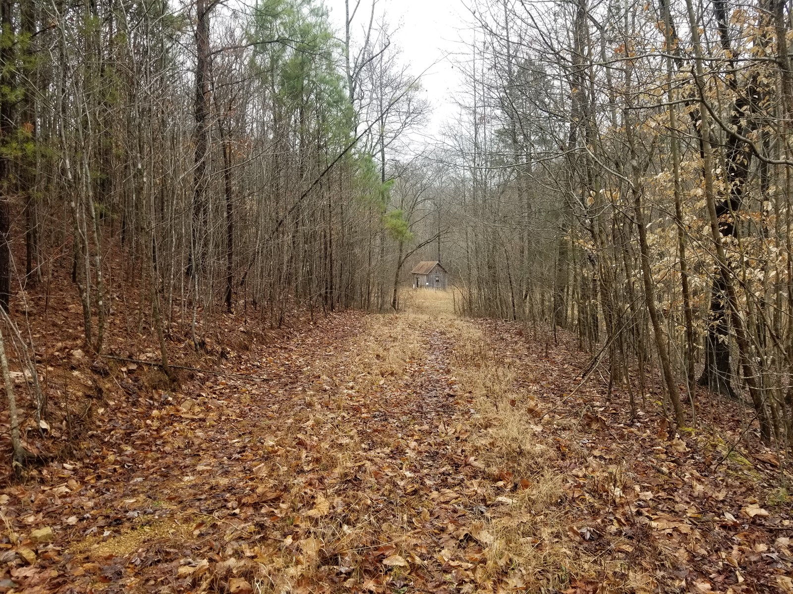 29 ACRE COLLINWOOD TN LAND FOR SALE CREEK SPRING WELL CABIN