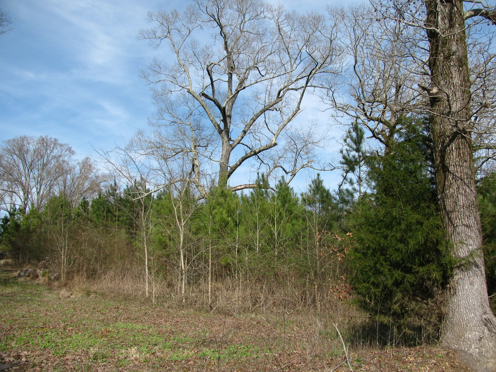 COUNTRY BUILDING LOT IN KOSSUTH, MS, 4.350 ACRES