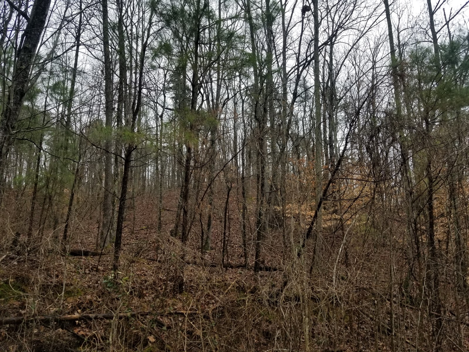 12.6 ACRE COLLINWOOD LUTTS TN WOOD LAND HOMESITE FOR SALE