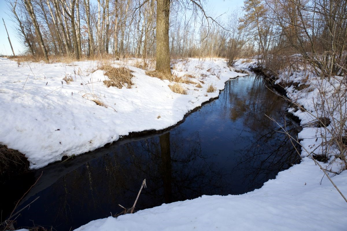 Masterful Hunting Land for Sale in Adams County, WI