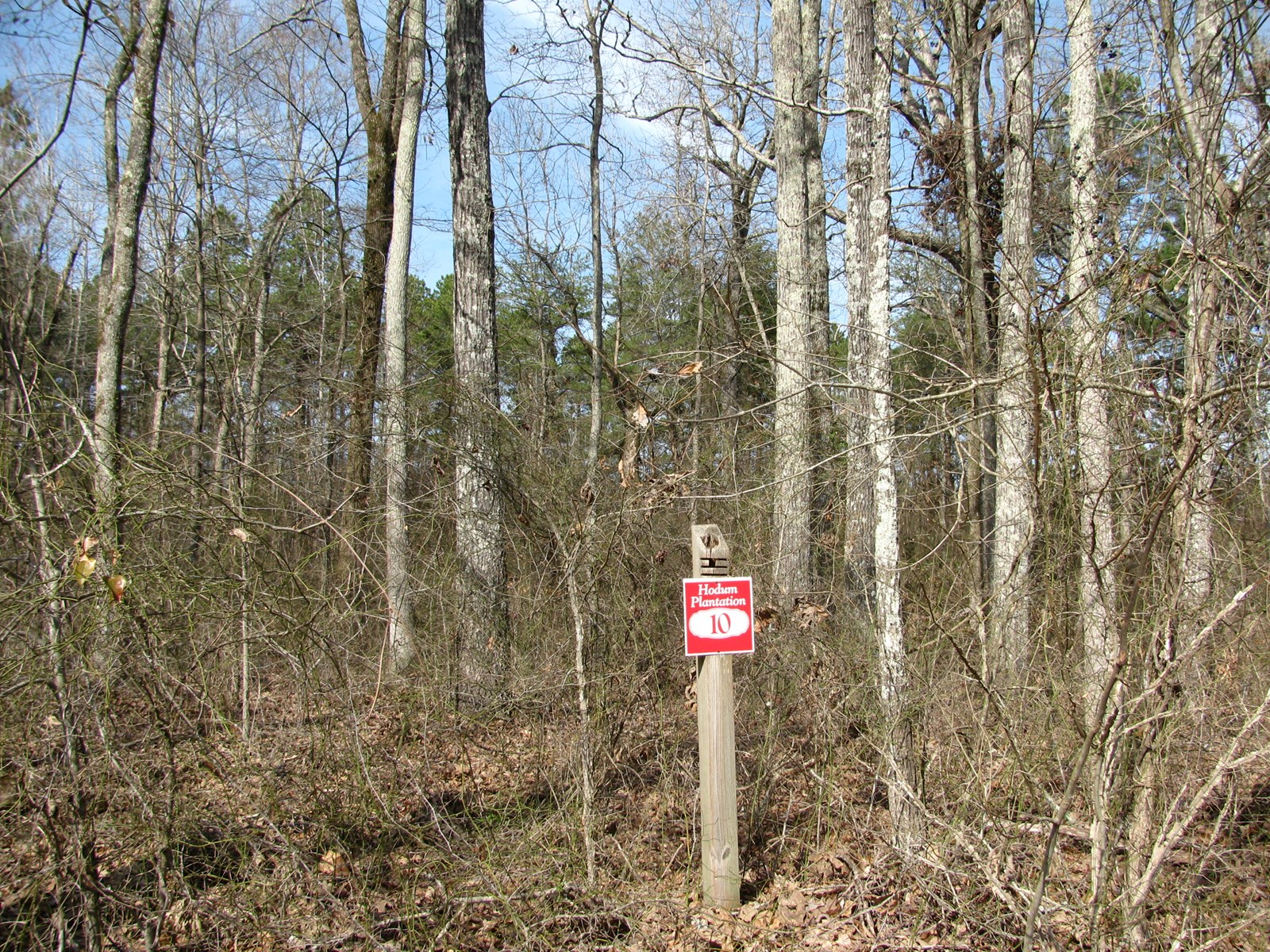 GREAT BUILDING LOT IN KOSSUTH, MS, 2.512 ACRES