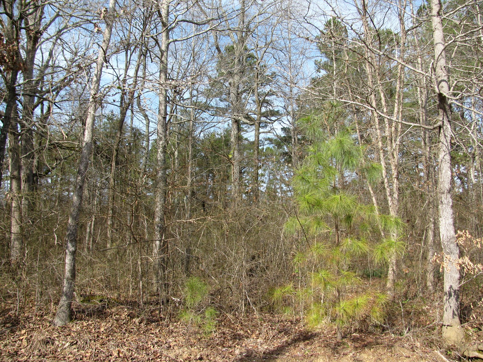 GREAT BUILDING LOT IN CORINTH, MS, 2.329 ACRES