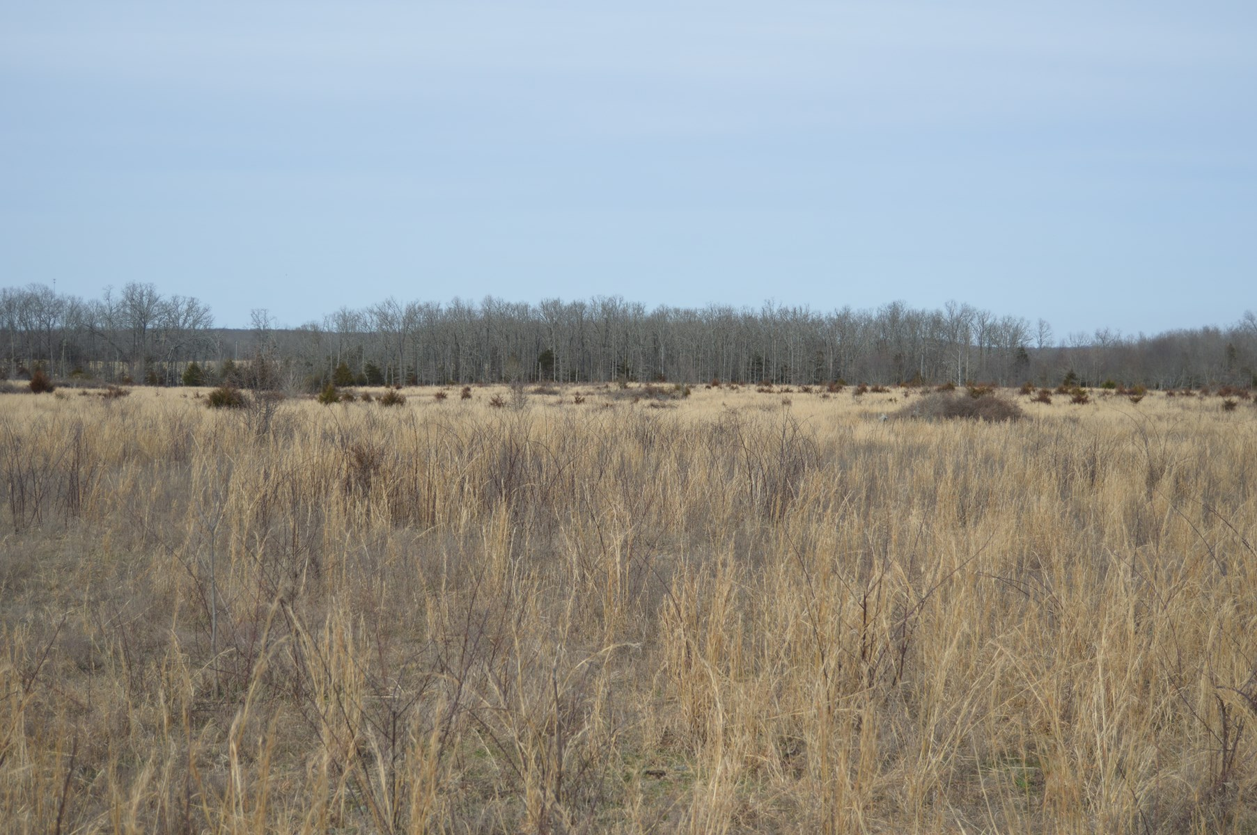 Vacant land in West Plains MO, 33 acres  pasture, Howell Co.