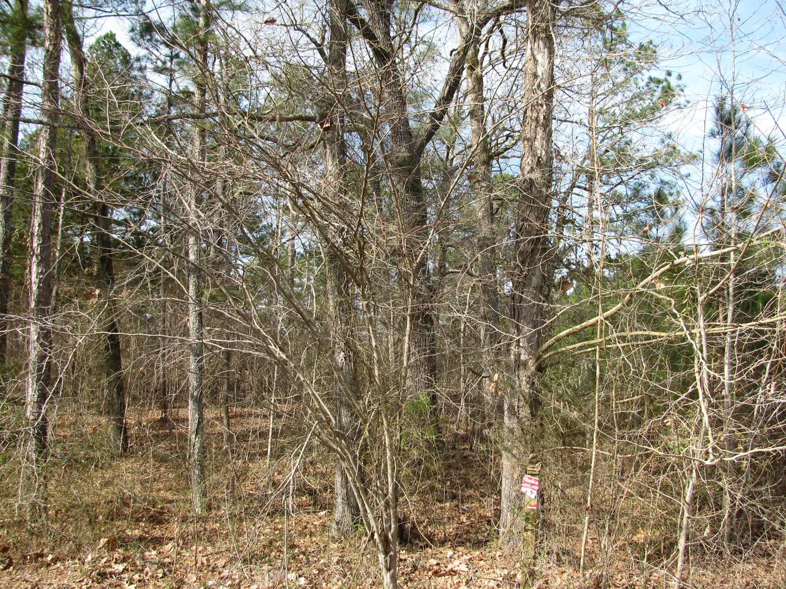 GOOD BUILDING LOT IN KOSSUTH, MS, 2.289 ACRES
