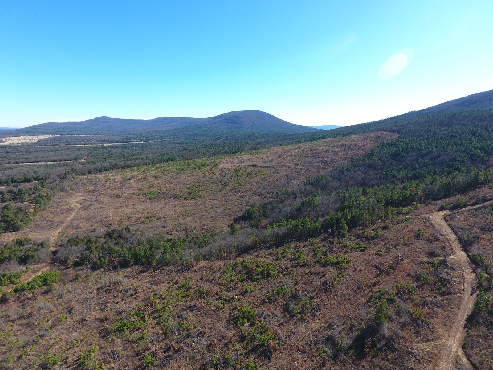80 Acre Timber Investment and Hunting Property