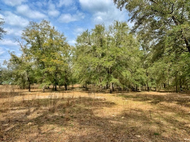 5 ACRES FOR SALE HIGH SPRINGS - GILCHRIST COUNTY FLORIDA