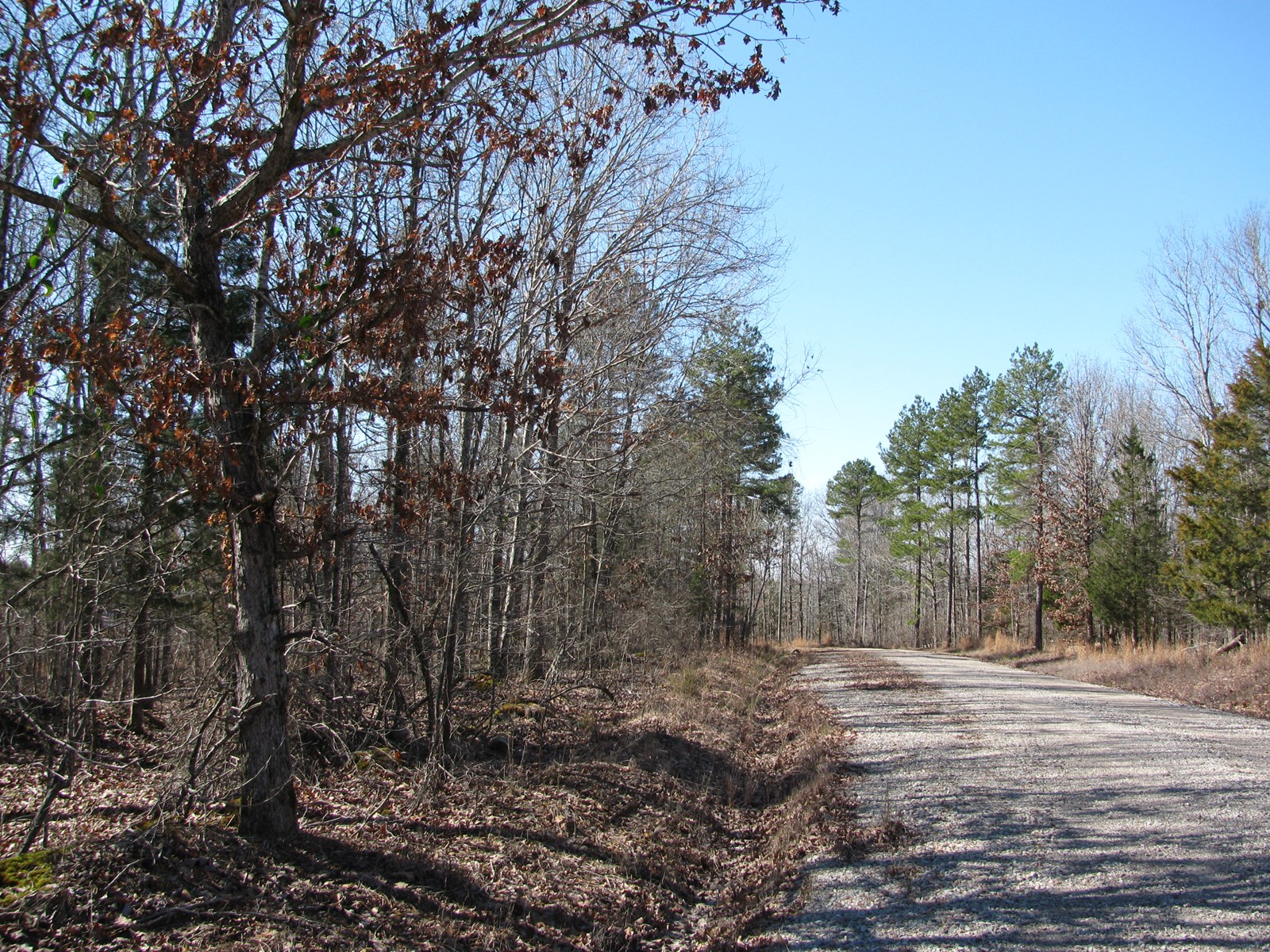 COUNTRY BUILDING LOT FOR SALE IN TENNESSEE, WOODED 1.37 ACRE