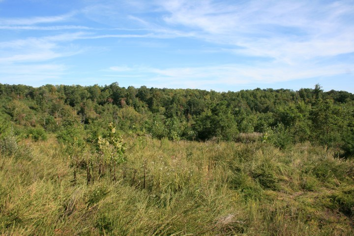 42.9 ACRES OF LAND FOR SELL IN PATRICK COUNTY,  VIRGINIA