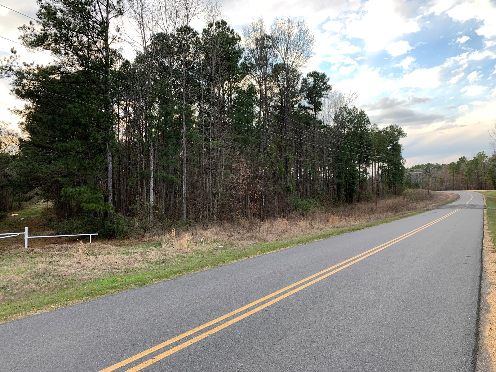 Rural Country Pine Timberland for Sale near Magnolia, AR