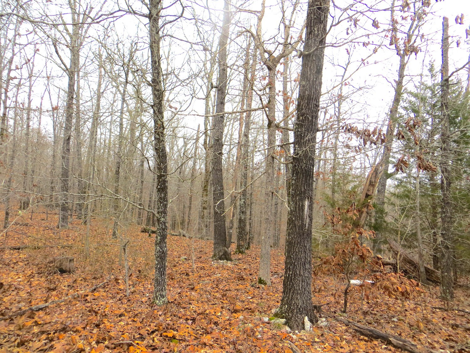 Vacant Land for Sale in Arkansas Ozarks