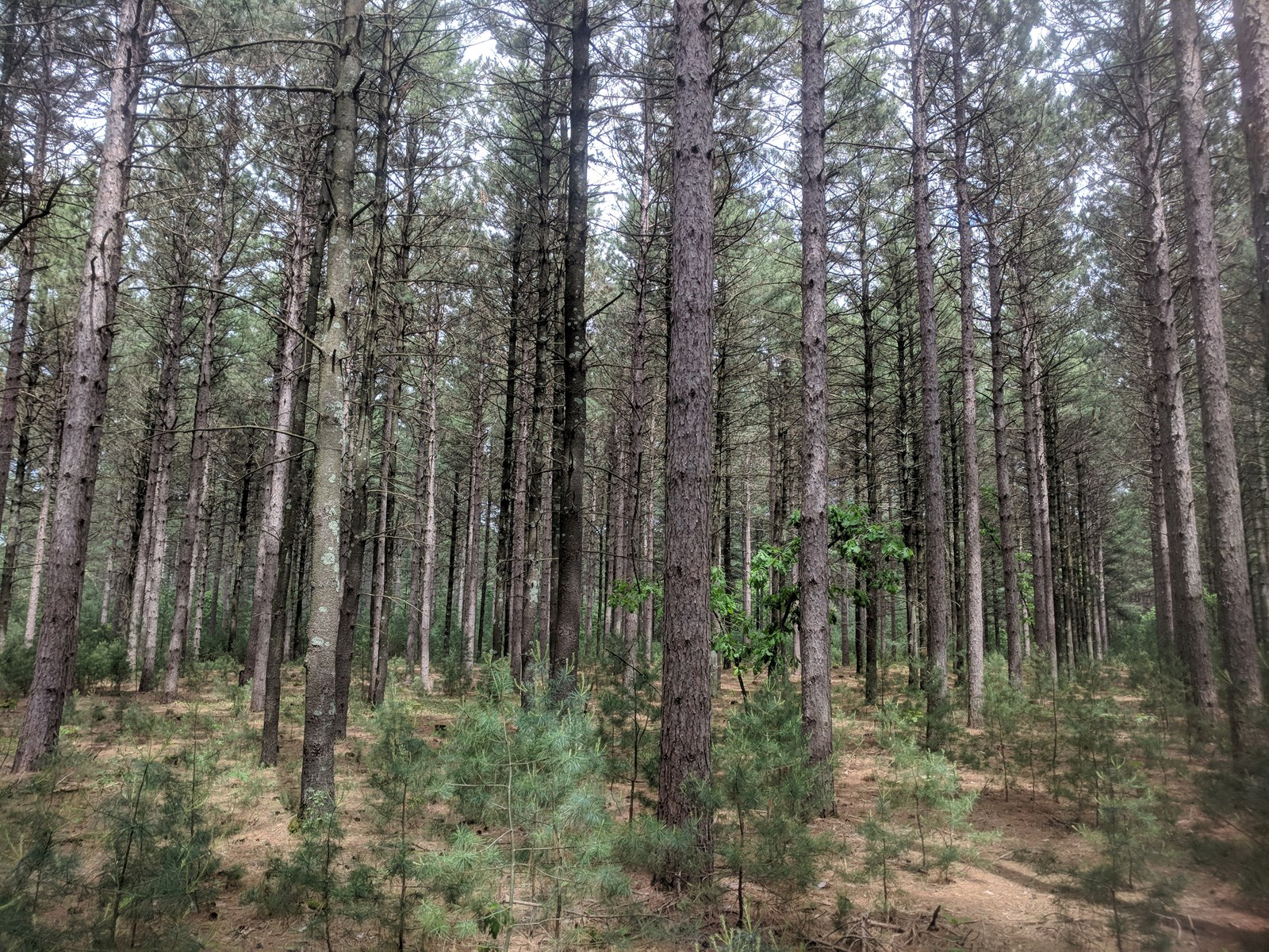 20 Acres Managed Forest Land for sale in Hancock, WI