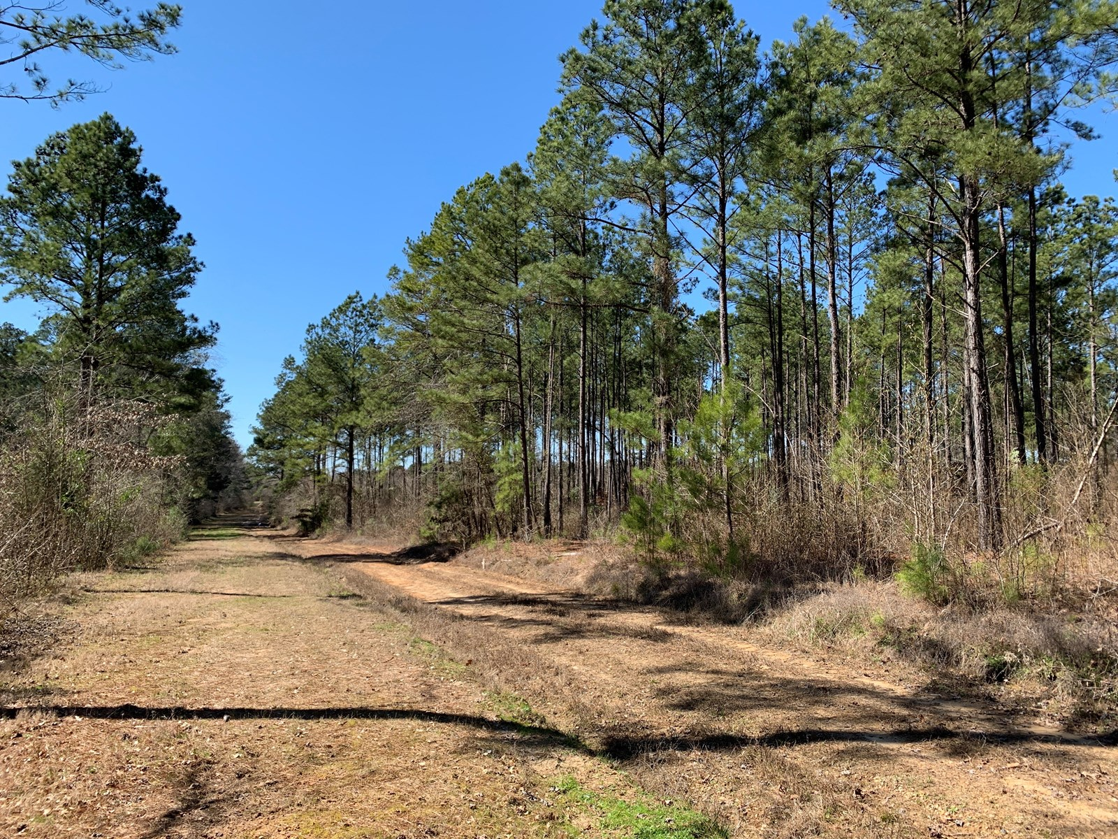 Pine Timber Land W/ Utilities on County RD near Magnolia, AR