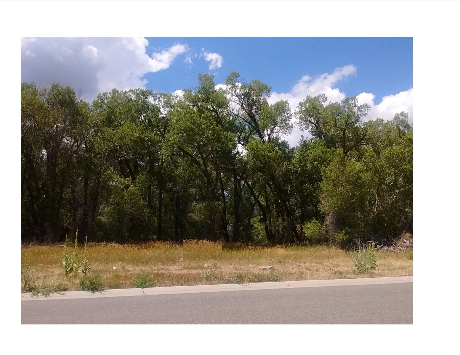 Lot for sale in Cedaredge CO