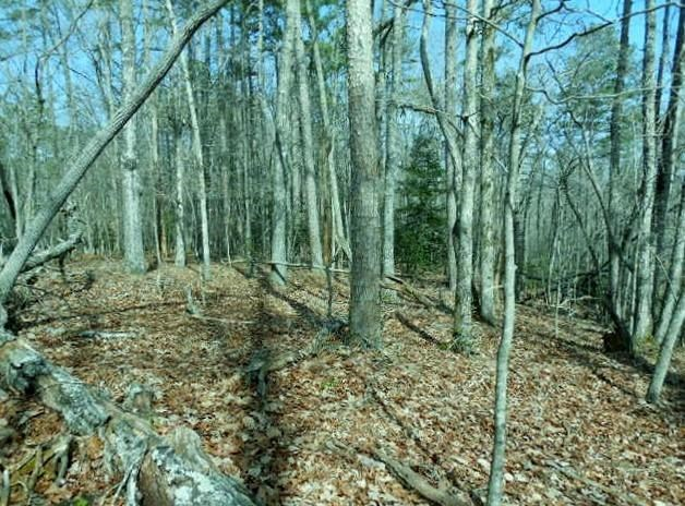 Mountain Land for sale, Ellijay, GA Gilmer County