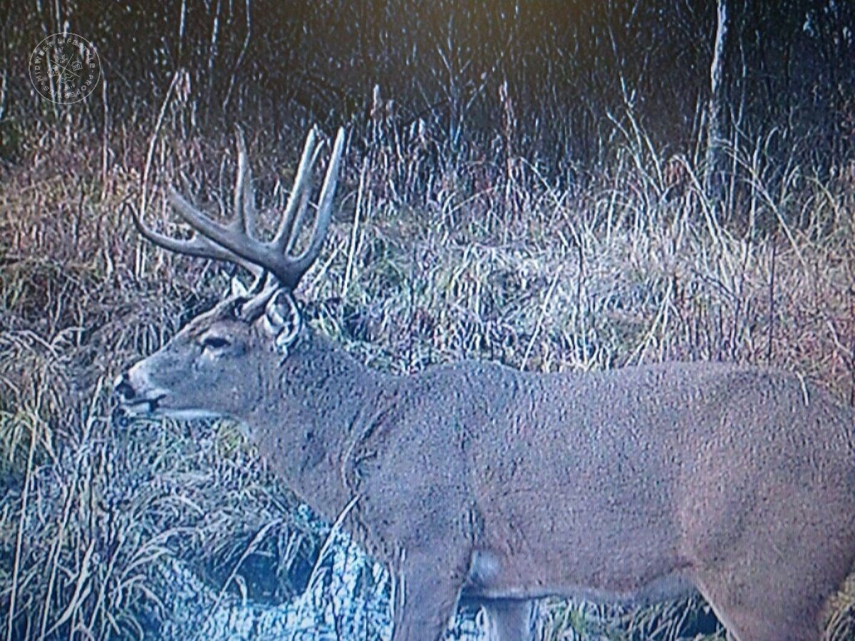 50 Acres of Prime Hunting Land Waushara Co.
