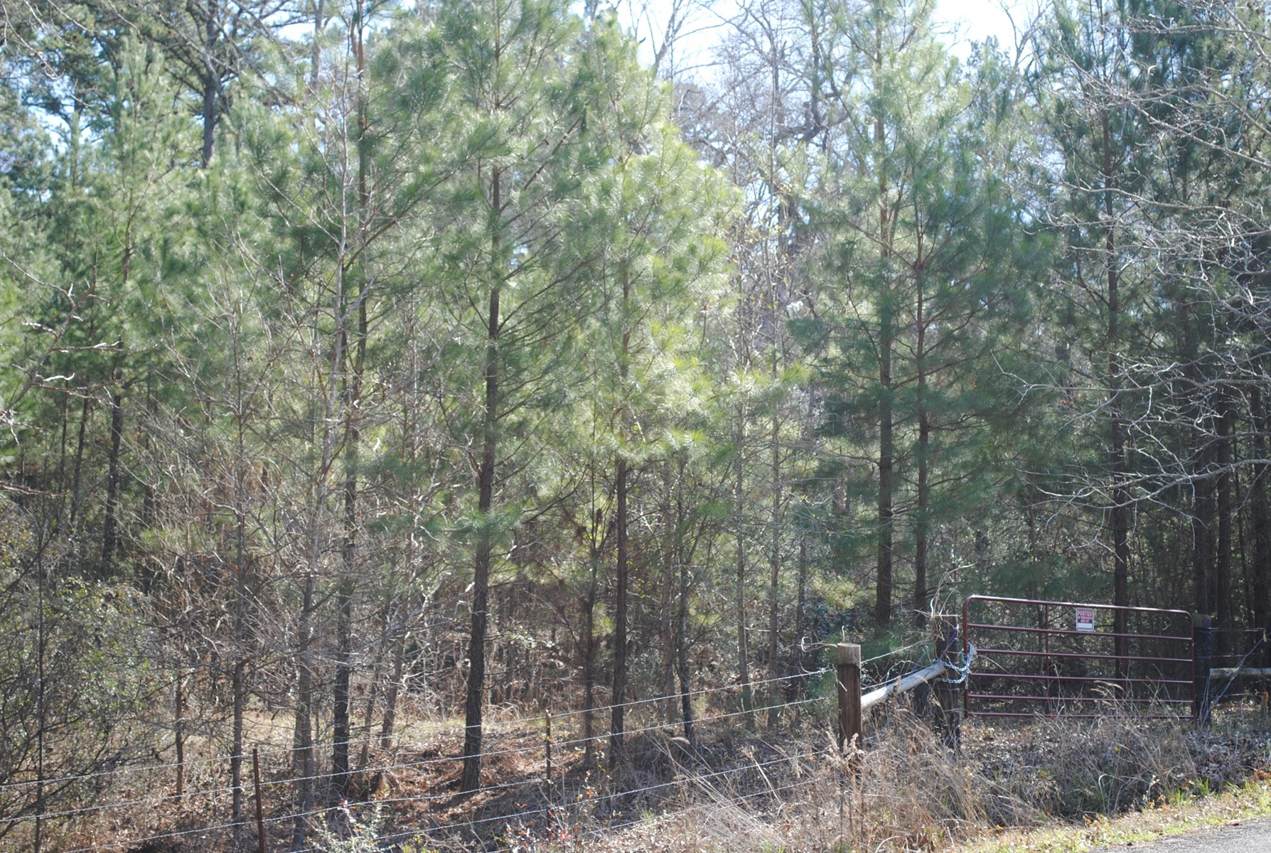 Small Acreage Smith County Tyler Tx  Wooded