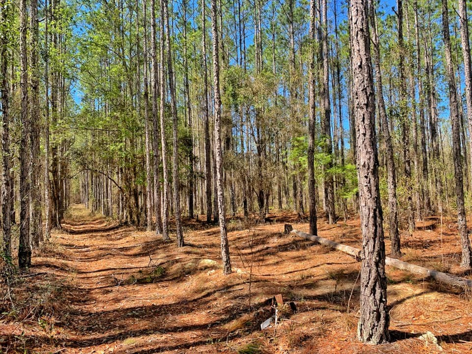 40 ACRE TIMBER/HUNTING TRACT - Bronson, Levy County, Florida