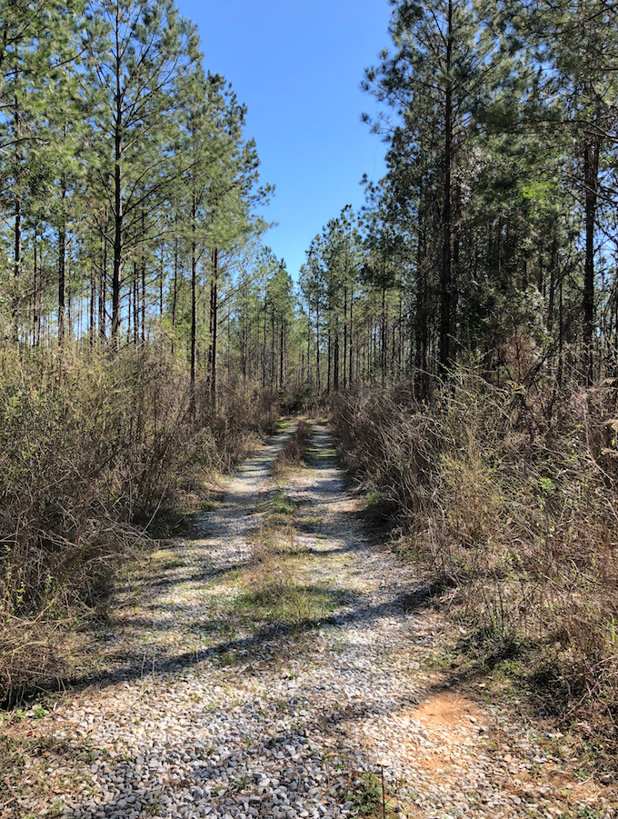 33 Acre homesite in Lee County