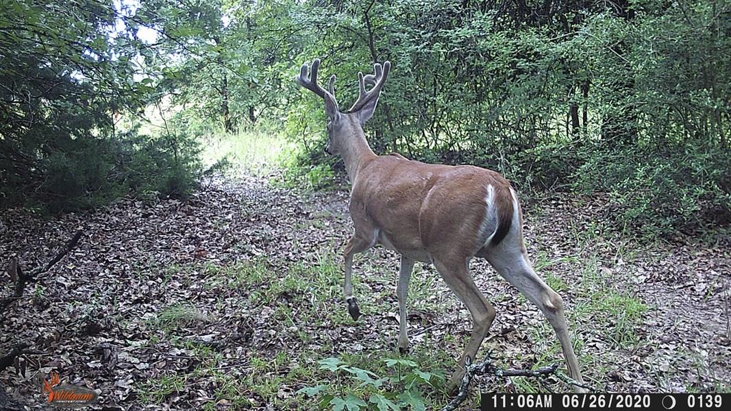 Deer Hunting Properties