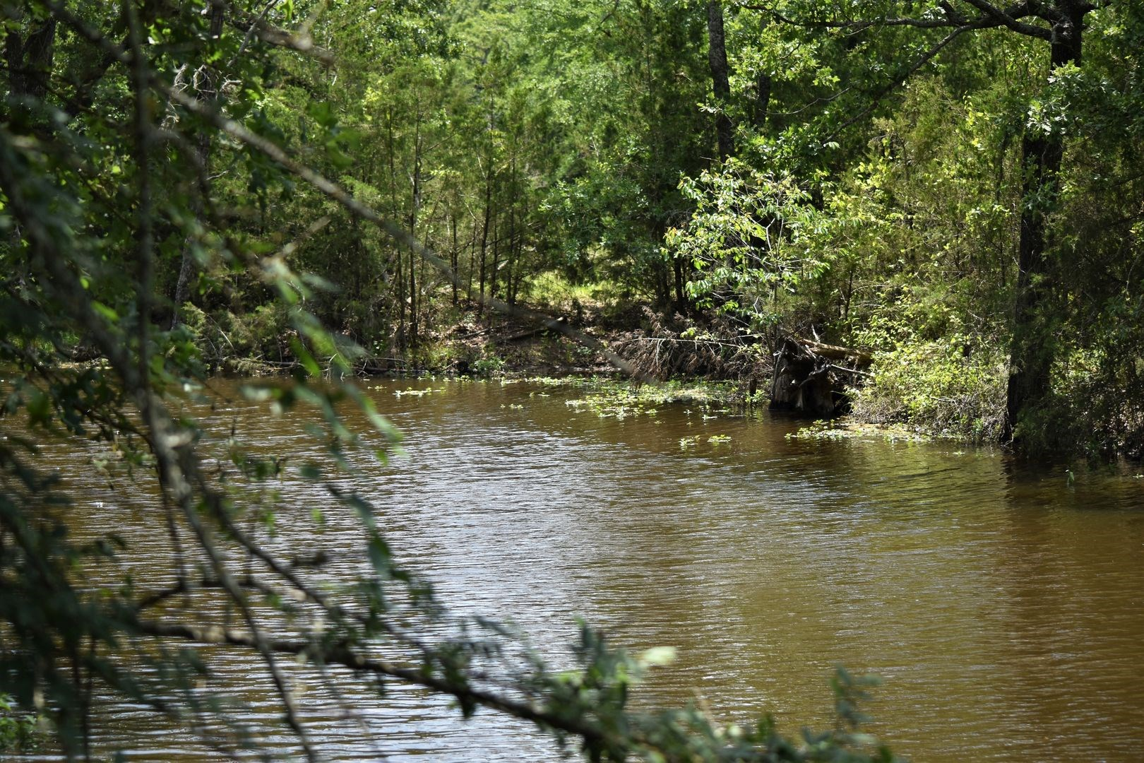 Bremond Texas Land for Sale Hunting Recreational Central TX