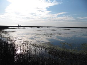 NORTHERN CALIFORNIA 480+ ACRE DUCK CLUB INTEREST FOR SALE