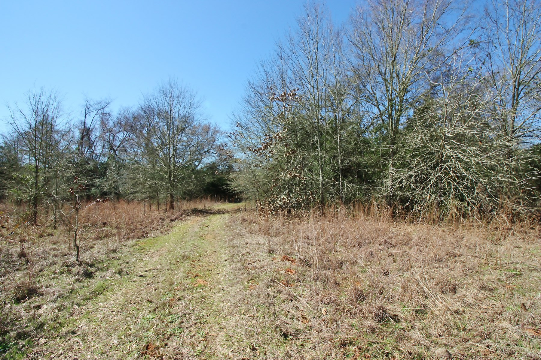 Hunting Land For Sale in Leon County, TX