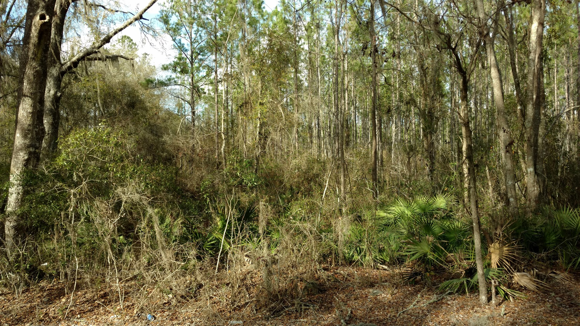 15 ACRES FOR SALE NORTH CENTRAL FLORIDA