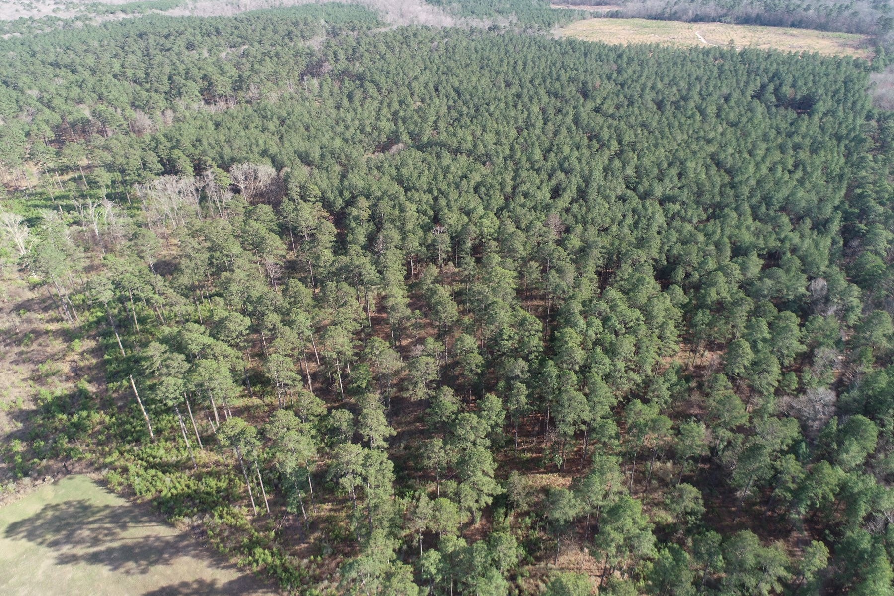 Natural Pine Timberland near Atlanta, AR for Sale
