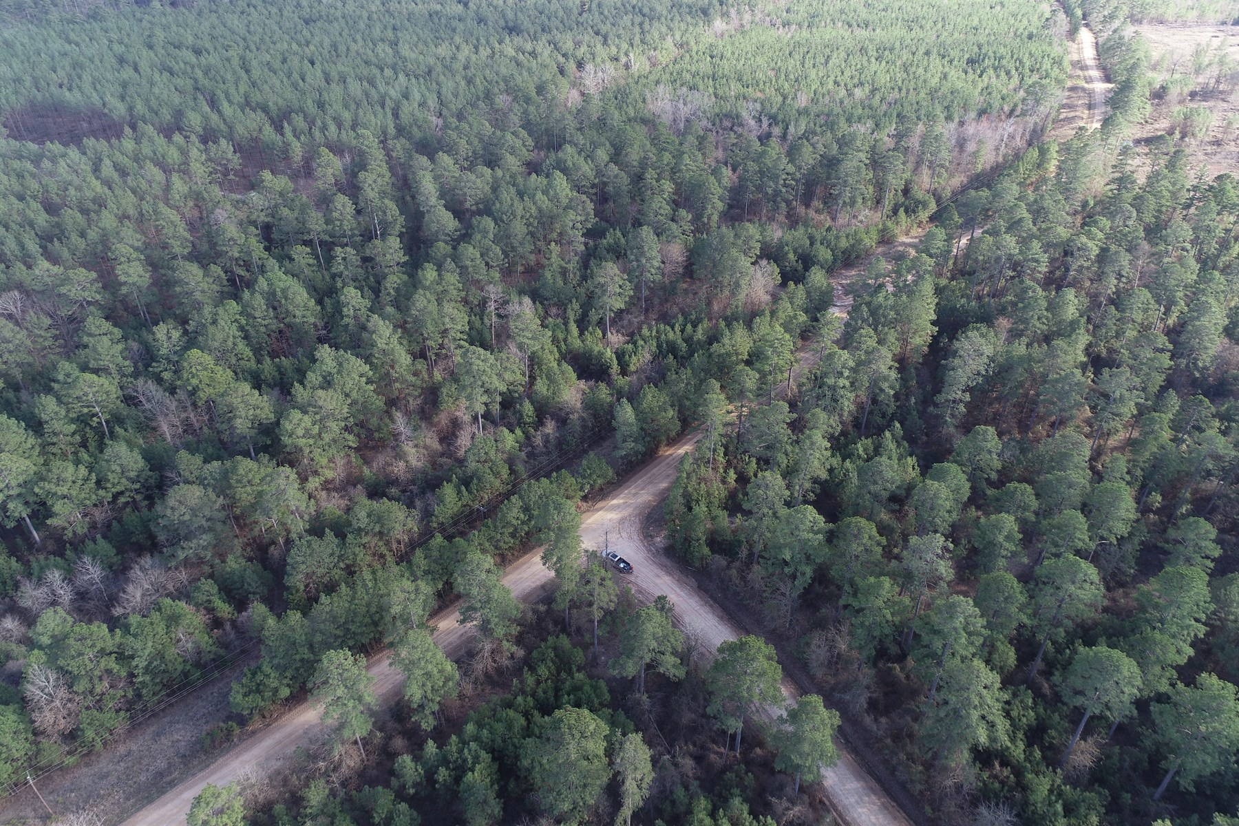 Natural Pine Timber on County Road for Sale near Atlanta, AR