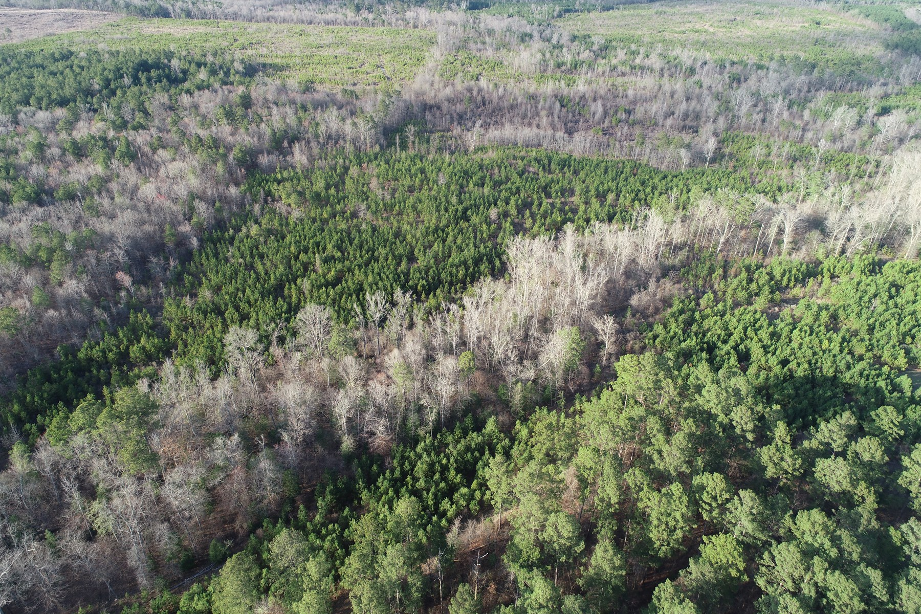 Planted Pine W/ Hardwood Creek for Sale Columbia Co., AR