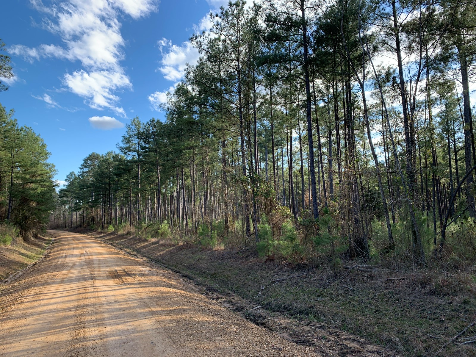 Pine /Hardwood Timber Land on County RD for Sale Southern AR