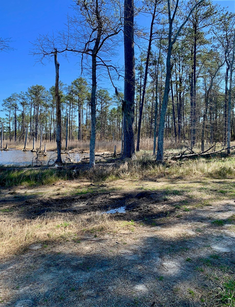 Waterfront Property in Beaufort County, NC/Recreational