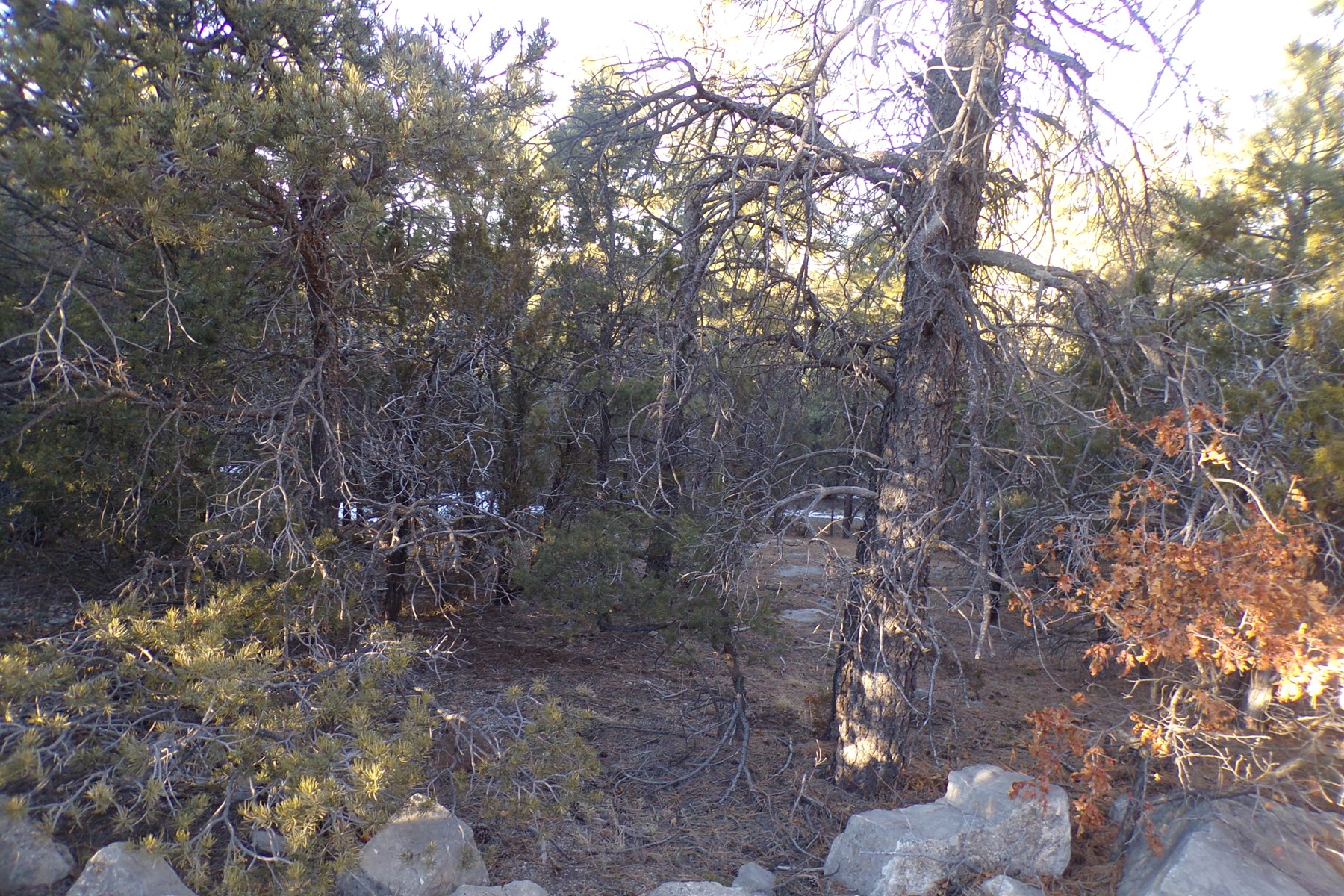 Edgewood, NM Residential 2.73 Acre Wooded Lot