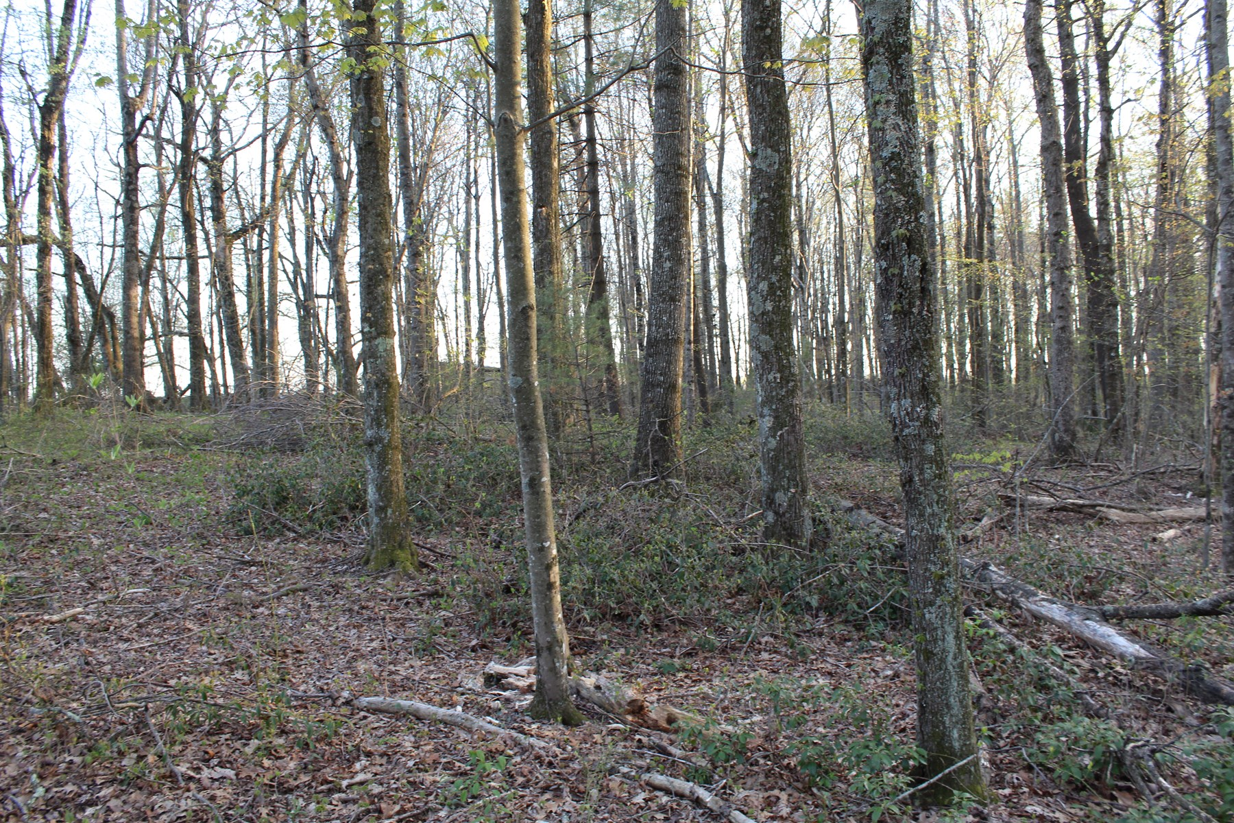 1.75 ACRES OF LAND LOCATED IN CARROLL COUNTY, VIRGINIA