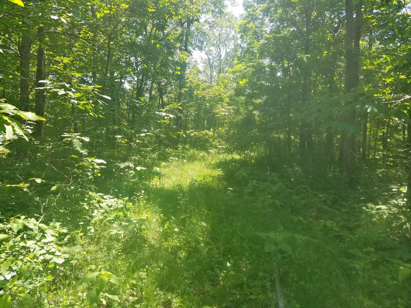 35 Acres Wooded Property For Sale Bland County, VA