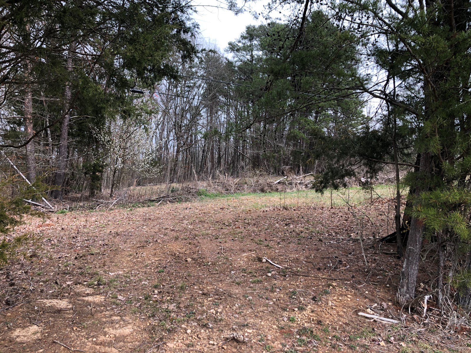 1 Acre Lot For Sale in Talbott, TN