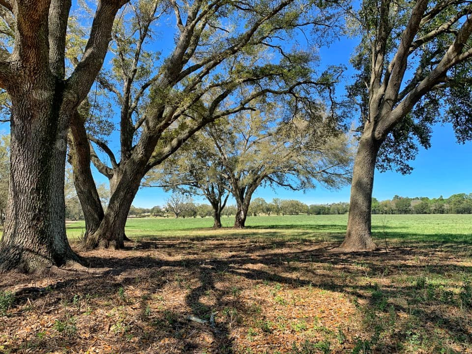 31 ACRES FOR SALE - WILLISTON LEVY COUNTY FLORIDA