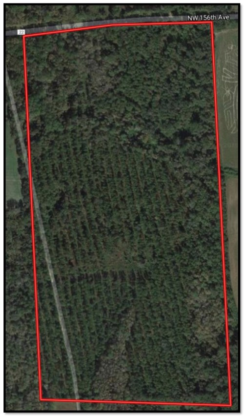 80+ Acres Timberland for Sale in North Central Florida