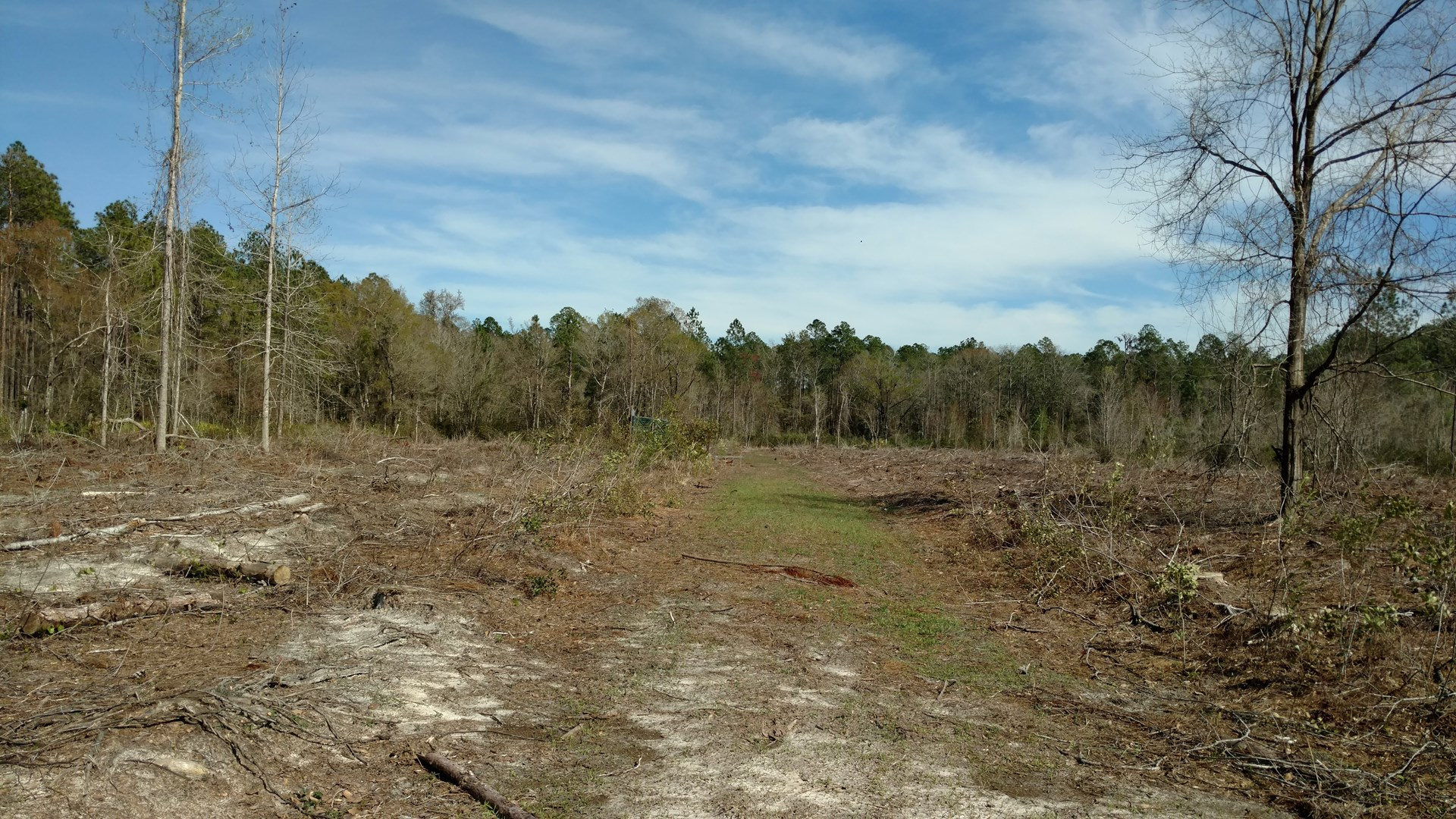20 ACRES FOR SALE IN OSCEOLA FOREST