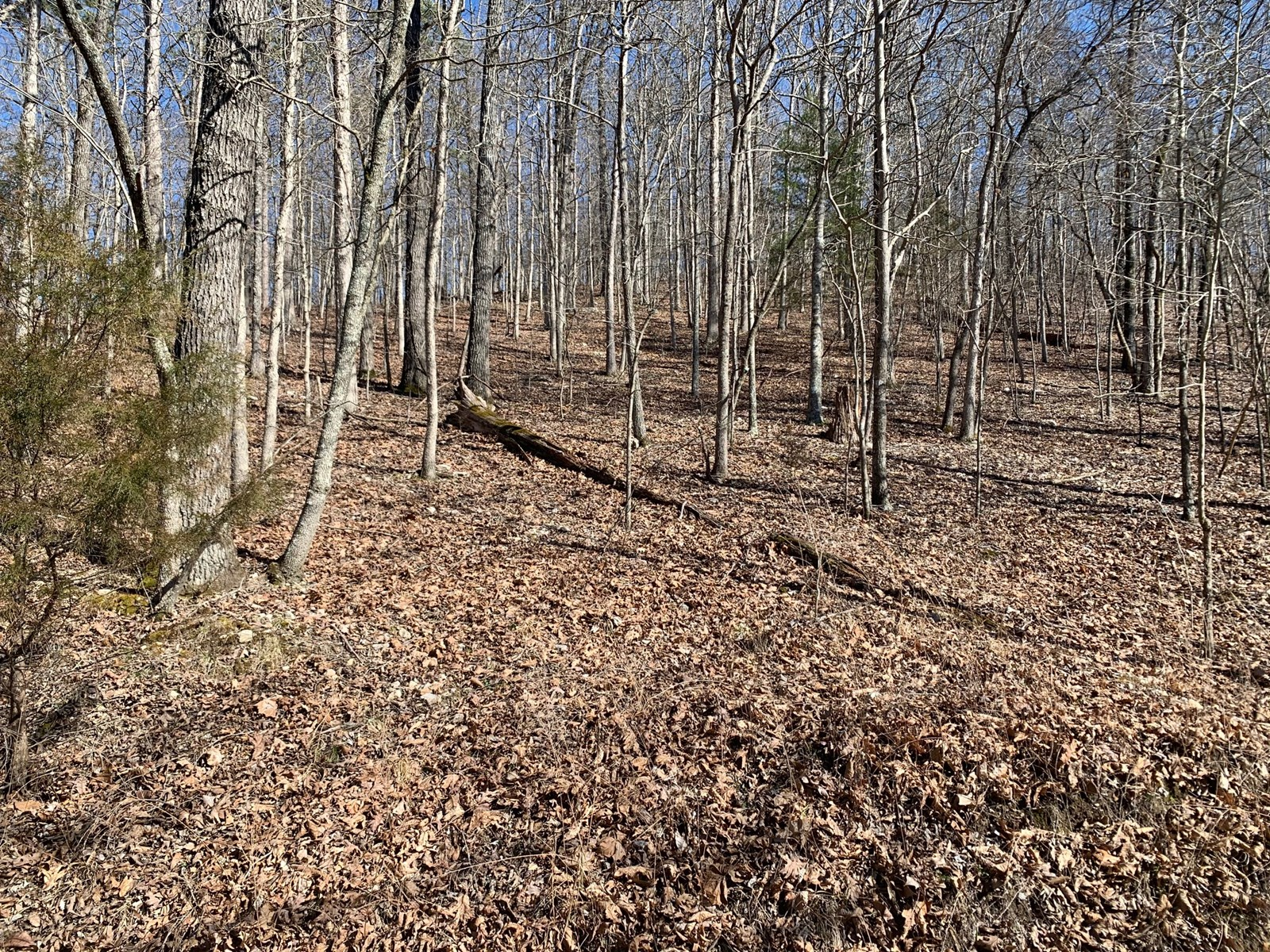 Pottersville MO Wooded lot overlooking the North Fork River.