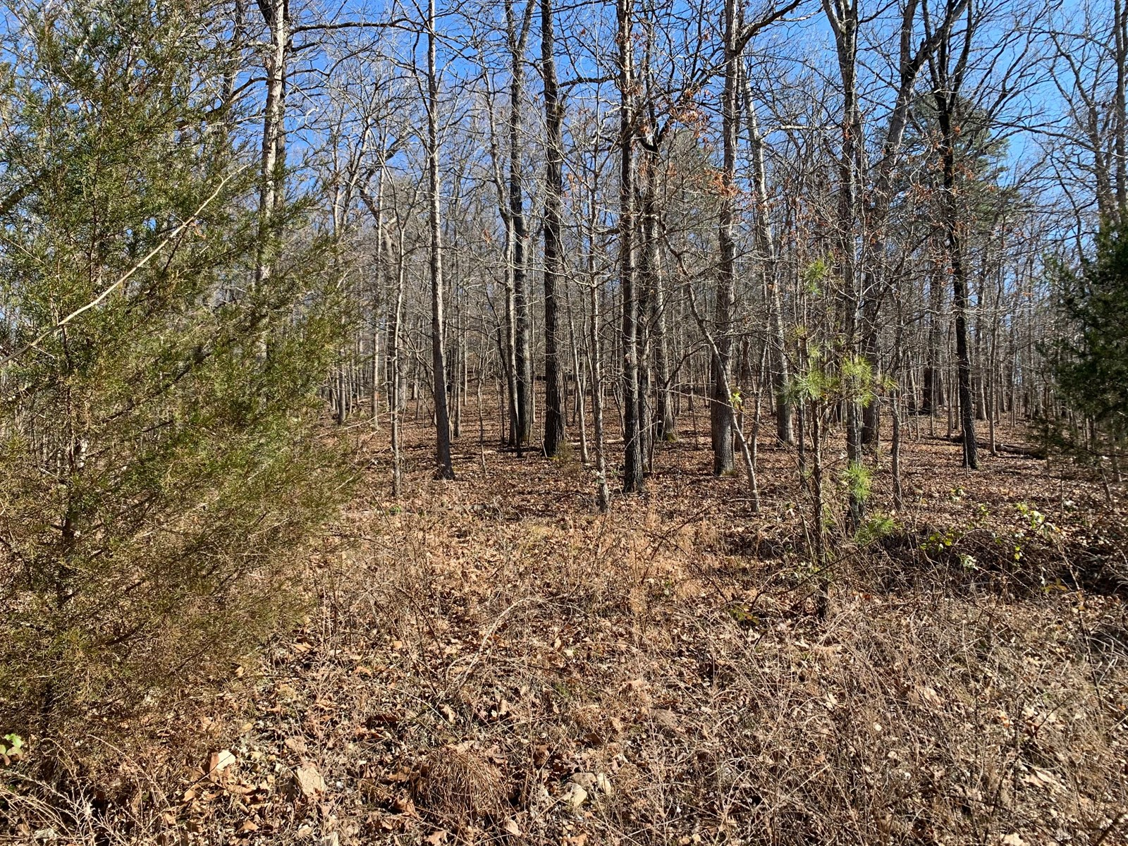 Pottersville MO Wooded lot overlooking the North Fork River