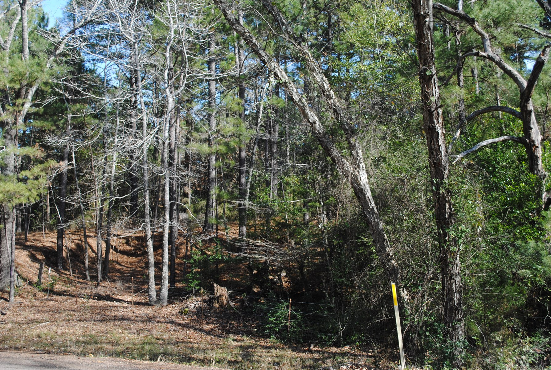 Smith County Land For Sale Recreational Timber Tyler Tx