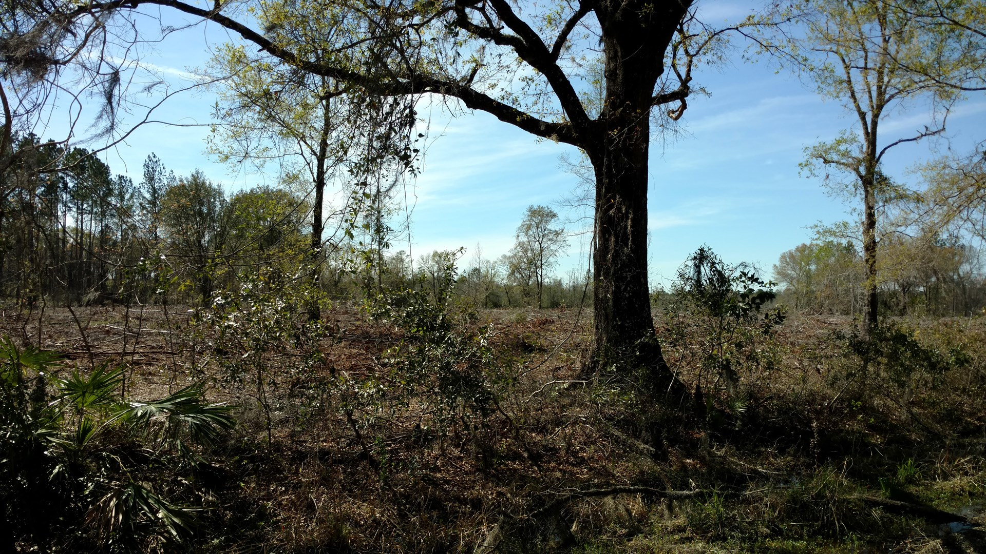 100 ACRES FOR SALE LAKE CITY FLORIDA